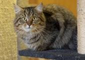 VIDEO! Aina rohkem loomi jõuab Tallinna loomade varjupaigast tagasi koju