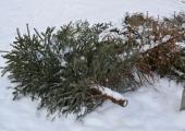 Kristiine vanad jõulukuused muutuvad roheliseks toasoojaks