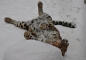 LOOMAAIA UUDISED: loomaaia asukad naudivad talveilma