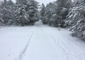Sütiste metsas saab suuskadel läbida 10 kilomeetrit