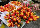 VIDEO! Viru tänava lilleäri õitses naistepäeva puhul