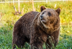 Jahimehed: karud on taliuinakust ärganud