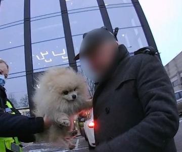 VIDEO! Mupo: rohkem tähelepanu ja hoolimist oma lemmiklooma vastu ehk Daimondi päästeoperatsioon