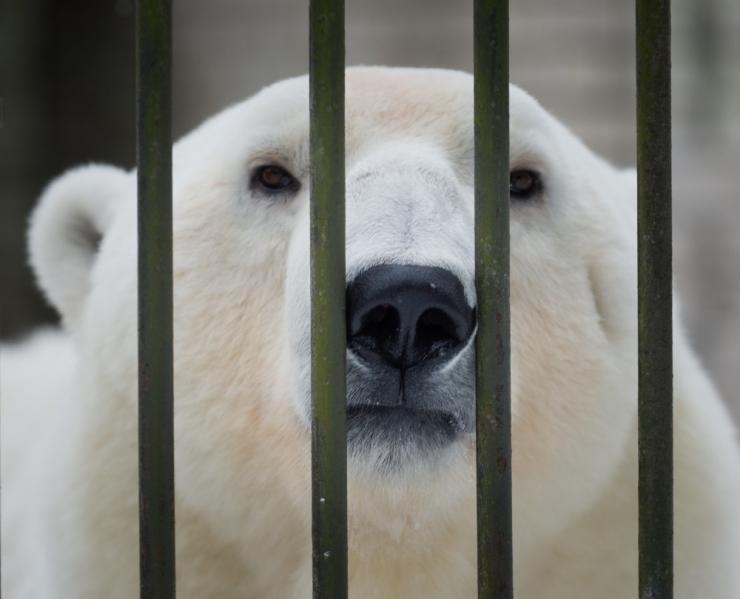Loomaaia pingviinid ja jääkarud saavad uue kodu