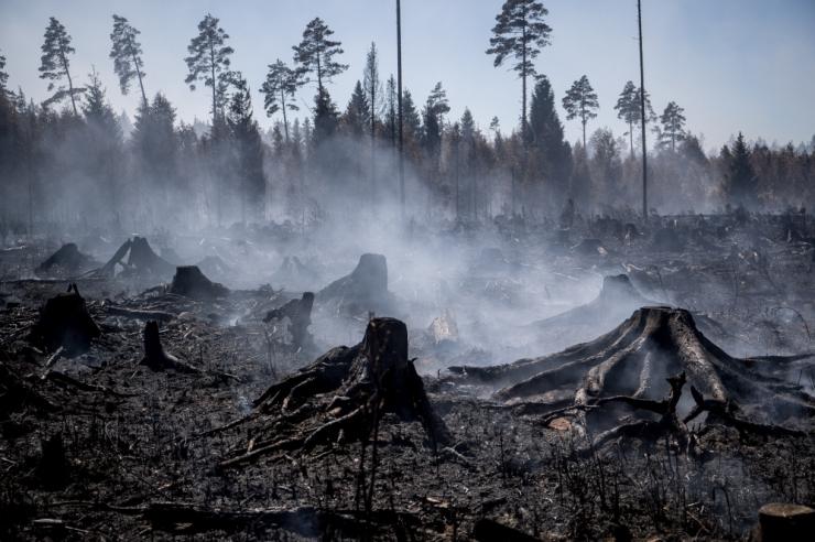 Vikipalu metsapõlengut käis kustutamas kokku üle tuhande inimese