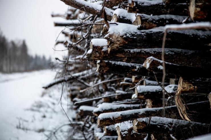 SDE toonitab keskkonnaprogrammis vajadust majandada metsa mõistlikult