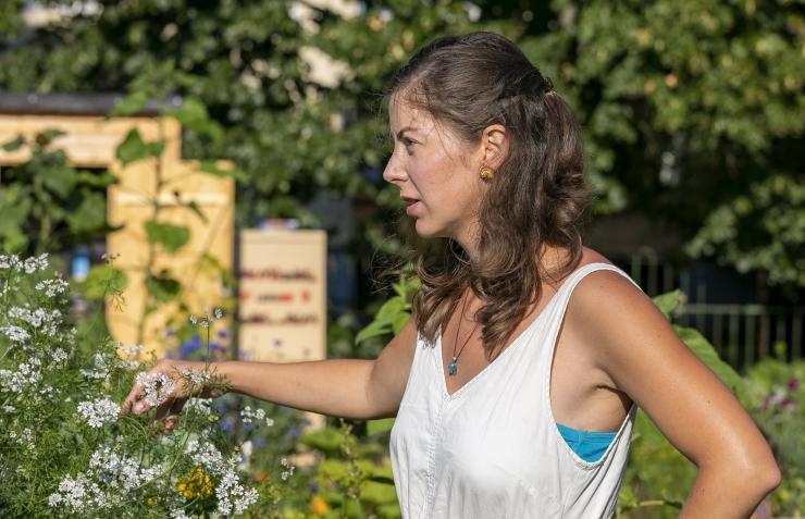Linnaaianduse lõikusseminaril räägitakse söödavate taimede kasvatamise tulevikust linnas