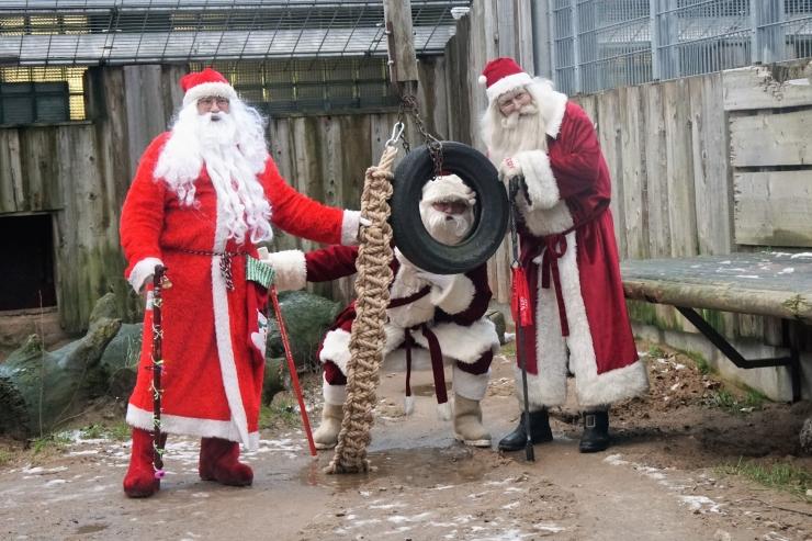 Jõuluvanad toovad laupäeval loomaaia loomadele jõulurõõmu