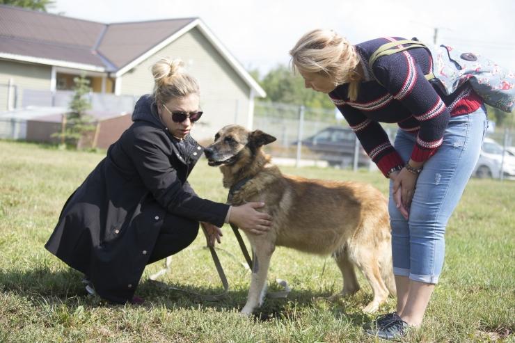 Mullu leidis Tallinna loomade varjupaigast uue kodu 527 looma