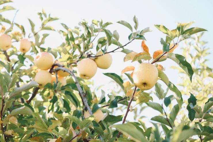 VIDEO! TORE ÜLLATUS: uues elurajoonis valmib elanikele suur õunaaed