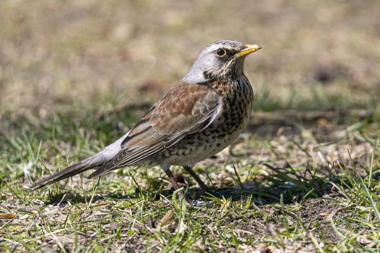 Loodussõbrad on oodatud linnuvaatlusretkele Rocca al Mares