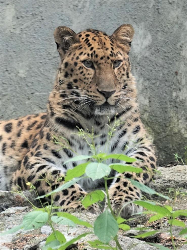 Loomaaed kutsub sünnipäeval loodushariduspäevale