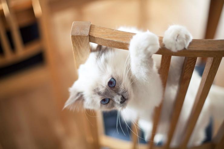 Uuring: 83% eestlastest tunnistab, et lemmikloomad parandavad emotsionaalset heaolu ja loovad elurõõmu