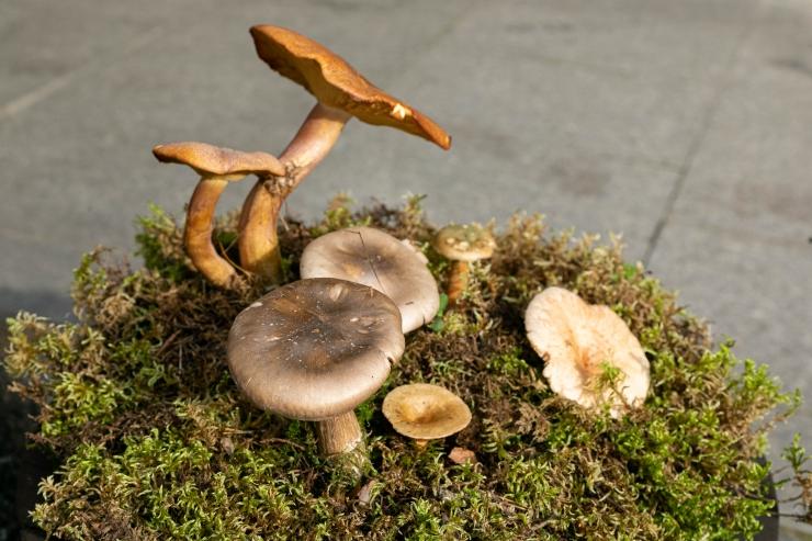PILDID! Loodusmuuseumi seenenäitus on avatud viimased kaks päeva