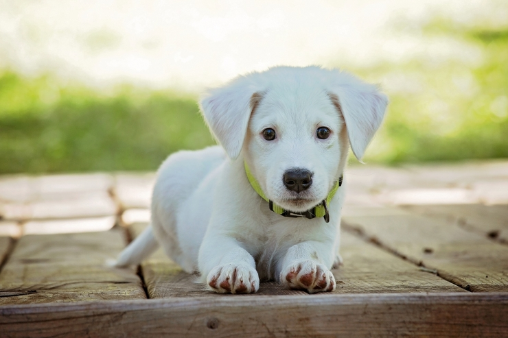 Tundkem rohkem koerte  psühholoogiat