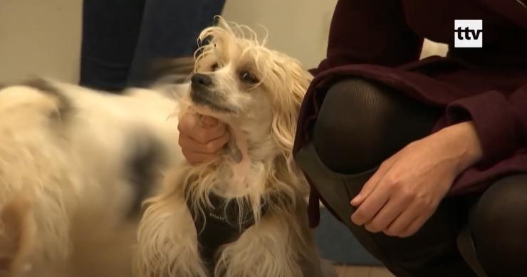 VIDEO! Haruldased harjaskoerad pääsesid kohutavast kodust