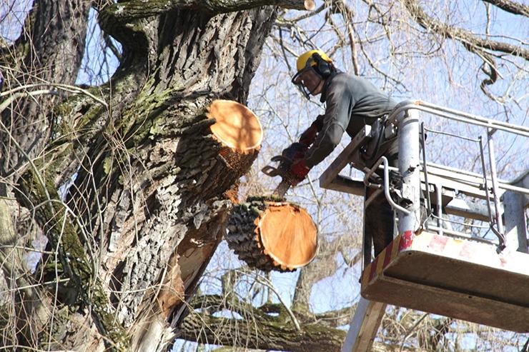Uus raiekord lubab jätta maha võetud puu asendamise linna hoolde