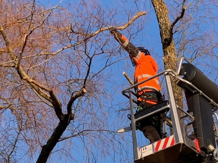 Pirital pügatakse vanu puid