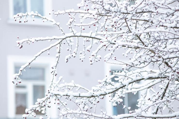 Soome põhjaosas mõõdeti 36,5 kraadi külma