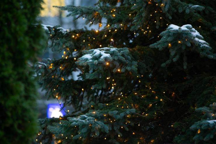 VIDEO! VAATA JÄRELE: Kuhu viia oma vana jõulupuu?