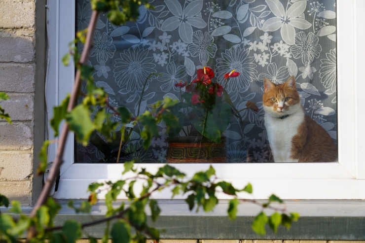 Eelmisel aastal jõudis varjupaigast koju üle 700 lemmiklooma