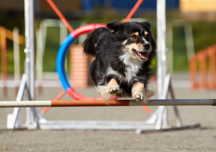 Piritale rajatakse esimene hiiglaslik koerte jalutusväljak