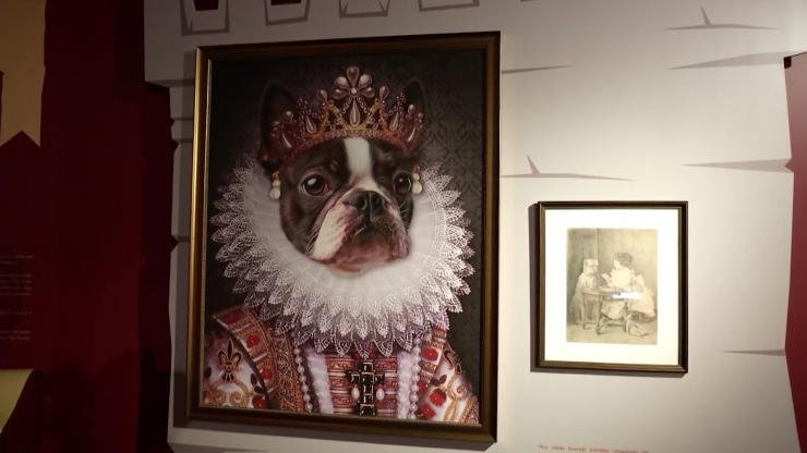 VIDEO! Maarjamäe lossis avati näitus, mis annab ülevaate koera ajaloost