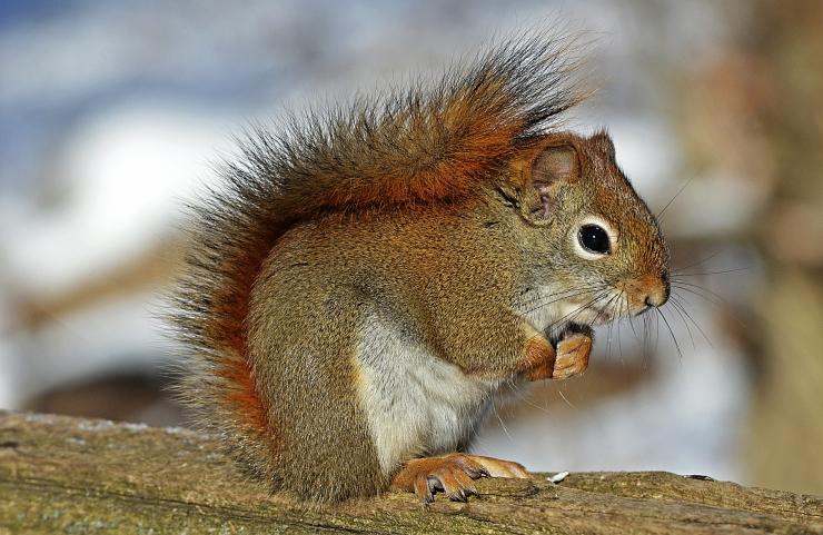 Õnnetu oravajaht ja ootamatult süttinud pesumasin ehk koroona-aasta omapärasemad kodukahjud