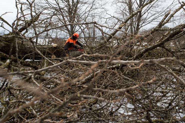Keskkonnakomisjon arutas RMK tegevust metsade majandamisel