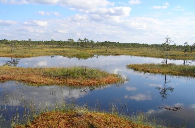 Keskkonnaagentuur avas Eesti elurikkust kajastava loodusportaali